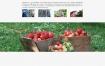 化工化学肥料企业网站织梦dede模板源码[自适应手机版]